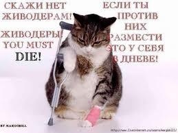 Un moldovan va sta 2 luni dupa gratii la odesa pentru cruzime asupra animalelor