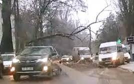 Un copac s-a rupt în două şi se sprijină pe liniile de troleibuz