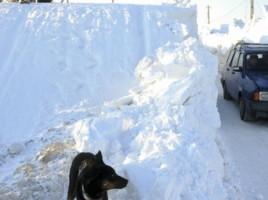 În România a căzut prima ninsoare din acest sezon