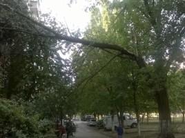 Un copac s-a prabusit peste un bloc de locuit din capitala. Cateva geamuri, distruse. FOTO
