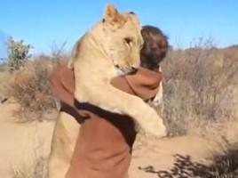 Culmea prieteniei! Vezi cum reactioneaza un leu cand este eliberat!VIDEO