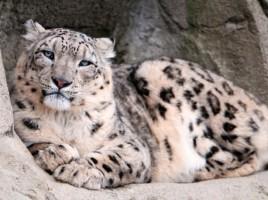 Colecţia grădinii zoologice din Chişinău a fost completată cu două exemplare rare