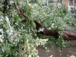 Ghinion pentru trei soferi din capitala: Un copac urias le-a distrus masinile