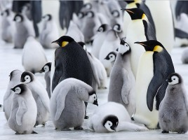 Robot deghizat în pinguin