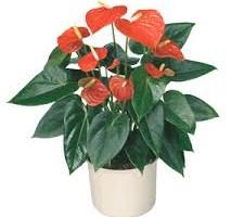 Caz bizar. O tinara din Chisinau a furat un ghiveci cu flori