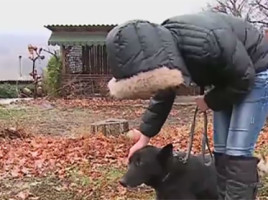 La Scoreni un vânător a tras două focuri de armă în direcţia unei minore (VIDEO)