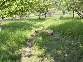 Descoperire la Cricova- cadavrul unui barbat batut crunt