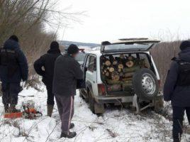 Retinere- 2 barbati ce defrisau ilegal copaci la Soroca